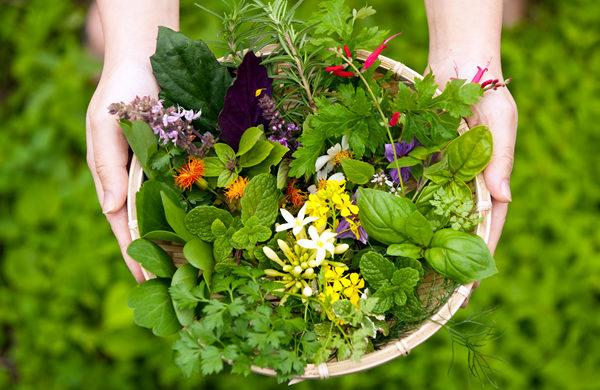 ハーブ庭園初心者も安心して始められる5つのコツ