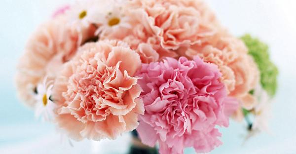 7月の誕生花メッセージ☆花言葉で選びたい初夏の花々