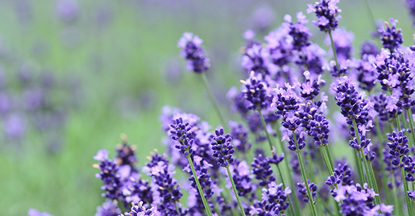 6月の花を大切な人へ☆花言葉も添えたいおすすめの花々