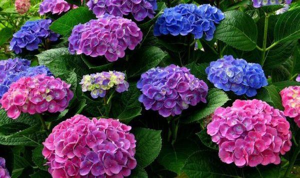 日陰植物を育てる際に気を付けたい5つのポイント