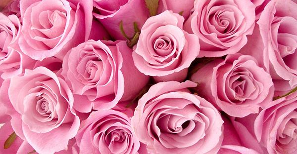 6月の誕生花を贈るなら☆伝えたい気持ちが届く花言葉