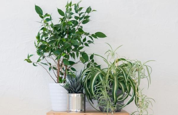 観葉植物の育て方に必要な5つのコツ