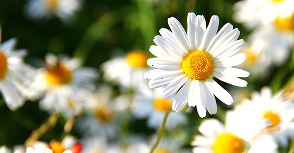 5月の誕生花ギフト☆贈る相手で選ぶ、おすすめの花々