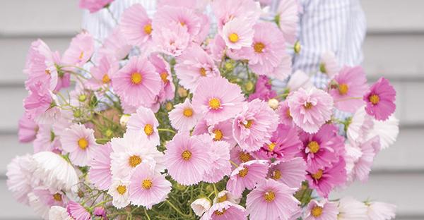 10月の誕生花ギフト☆メッセージに添えたい7つの言葉