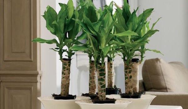 玄関に観葉植物を置いて開運する5つの方法