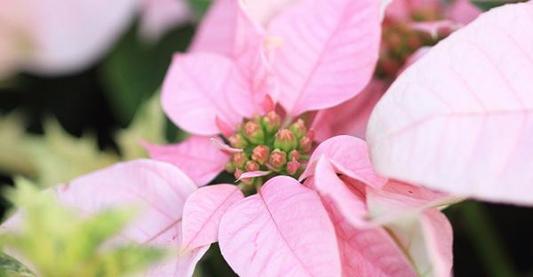 12月に花を贈るなら☆手入れも簡単、おすすめの花々