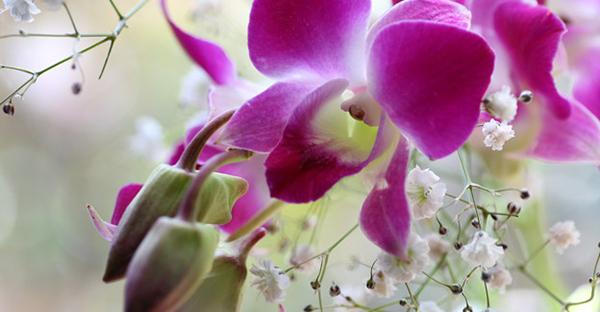 10月の誕生花を贈るなら☆花言葉も可愛い、人気の花々
