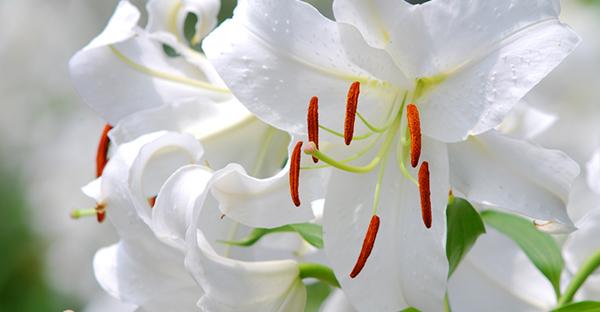 7月の花贈り☆相手のイメージ別に選びたい花々とは