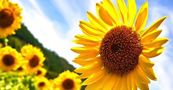 8月の誕生花ギフト☆相手のイメージで選ぶ、人気の花々