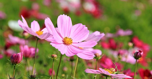 9月の花贈りでメッセージ☆気持ちが伝わる可愛い花々