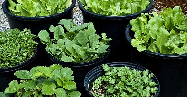 育てやすい野菜から始める家庭菜園☆おすすめ7つの品種