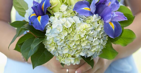 あじさいの育て方☆初めてでも花を咲かせるポイント