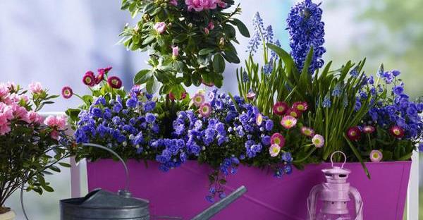 初夏の花ガーデニング☆爽やかさを演出する、丈夫な花々