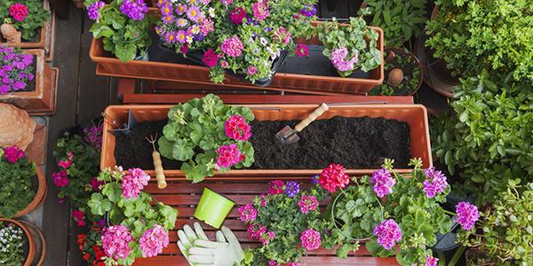 秋に咲く花で初めての庭づくり☆育てやすくて可愛い花々