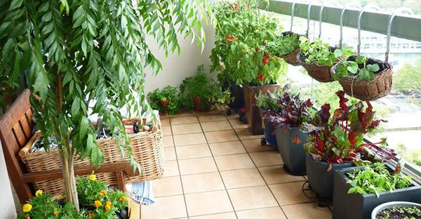 野菜栽培は狭いスペースでもOK!ベランダで育てるコツ