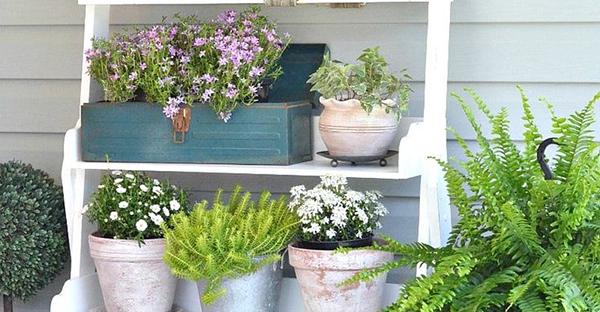 夏に咲く花を楽しむ☆庭を彩る、育てやすい花々とは