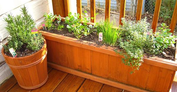 野菜栽培はベランダでも簡単☆気軽に楽しむためのコツ