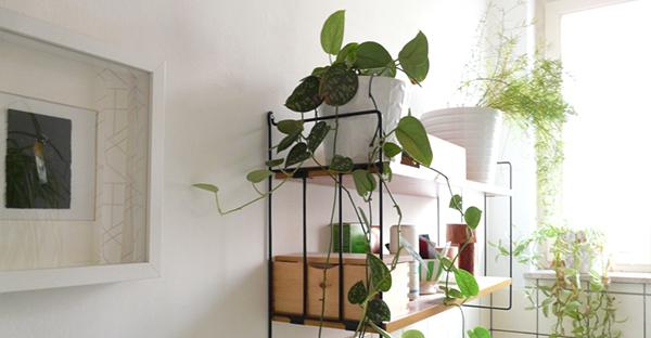 トイレの観葉植物☆丈夫に育つおすすめシェードプランツ