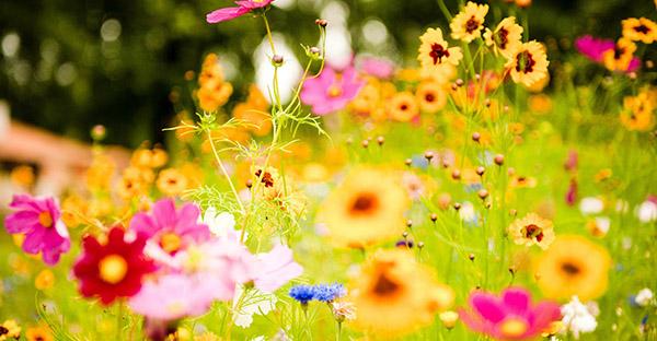 4月の誕生花とメッセージ☆さまざまな愛情を届ける花々