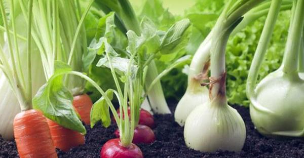 育てやすい野菜から始める☆初めてさんへのおすすめとは