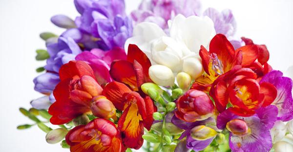 花言葉で友情を伝える☆友人に贈りたい、かわいい花々