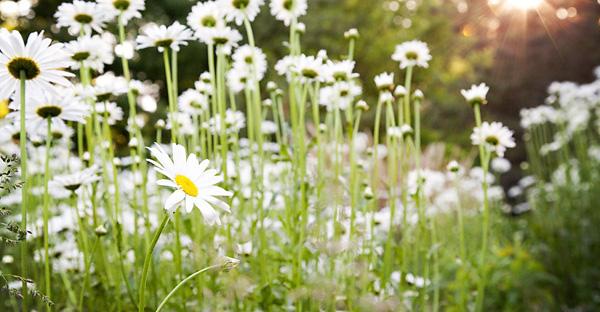 6月の誕生花を贈る☆花言葉とともに贈りたい花々とは