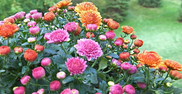 11月の花を咲かせる☆冬を彩る、育てやすい花々と育て方
