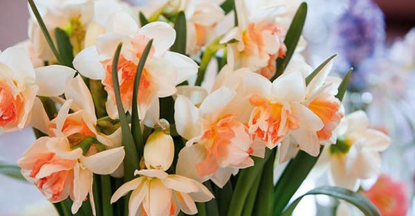 12月の誕生花で演出☆誕生日を盛り上げる、人気の花々