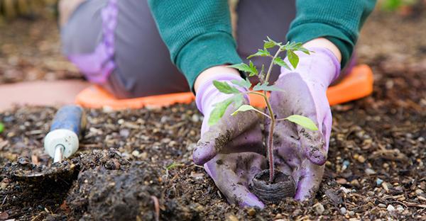 家庭菜園、最初の一歩☆初心者さんが楽しく始める道具とは