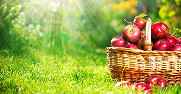 りんごの栄養に注目!ダイエットで重宝される理由と食べ方