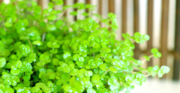 観葉植物の虫退治!園芸初心者さんでもできる、駆除と対策
