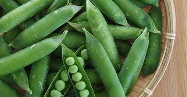 スナップエンドウの育て方☆自宅で簡単!プランター栽培