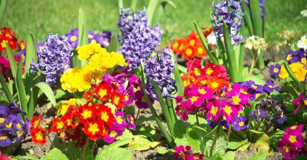 季節の花で一年を楽しむ☆ ガーデナーに愛される定番の花々