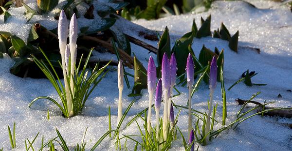 2月から花を育てる☆春の庭先を彩る、おすすめの花々