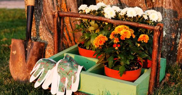 秋の花から始めるガーデニング☆寒い季節を彩る花々とは