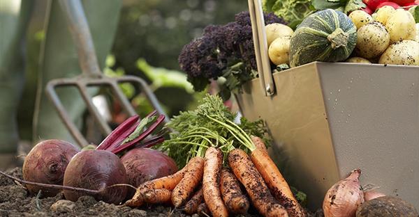 野菜の育て方☆土いじり初めてさん、収穫までのステップ