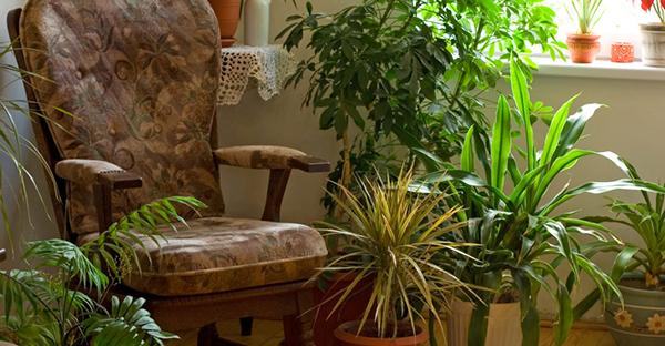 観葉植物の育て方☆ズボラさんが押さえたい基本の手入れ