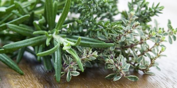ローズマリーの育て方は簡単☆初めてのハーブ栽培のコツ