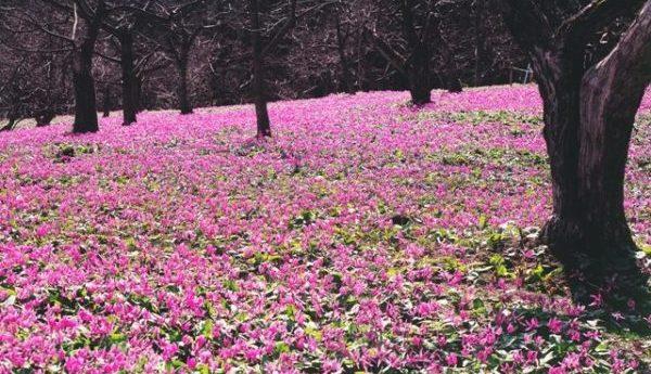 3月が見頃の花 オススメの名所 【関東編】