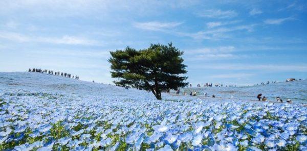 5月が見頃の花 オススメの名所 【関東編】