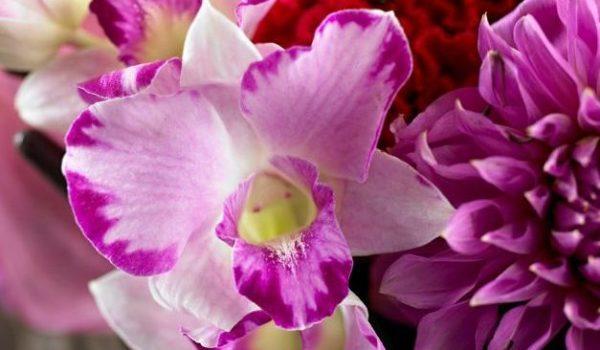 12月の誕生花とその花のロマンティックな花言葉