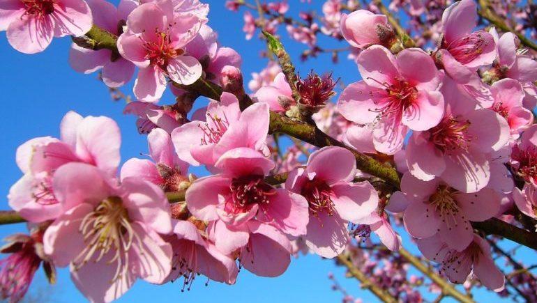 3月が見頃の花 オススメの名所 【関西編】