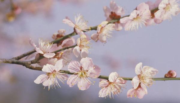 2月が見頃の花 オススメの名所 【関西編】