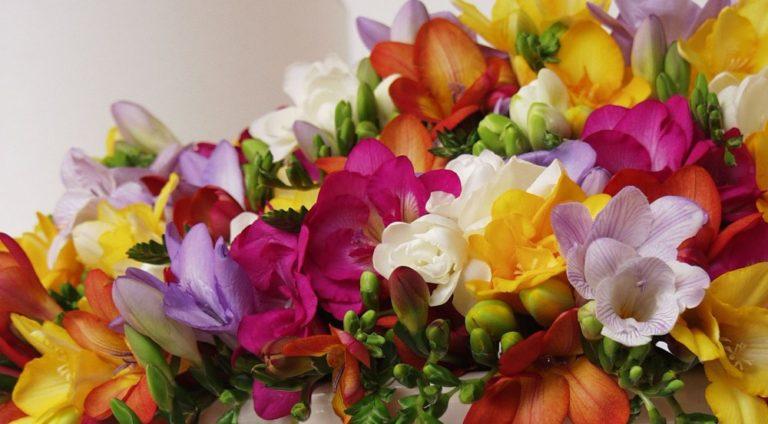 2月の誕生花をプレゼントする時のポイントと注意点