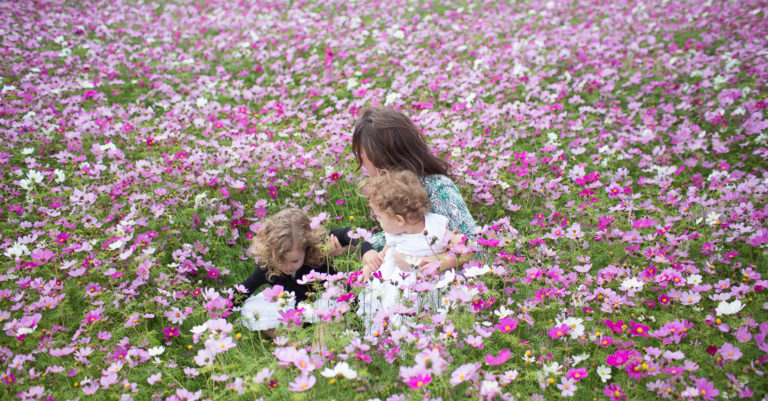 10月が見頃の花 オススメの名所 【関東編】