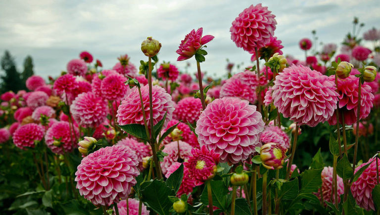 9月が見頃の花 オススメの名所 【関東編】