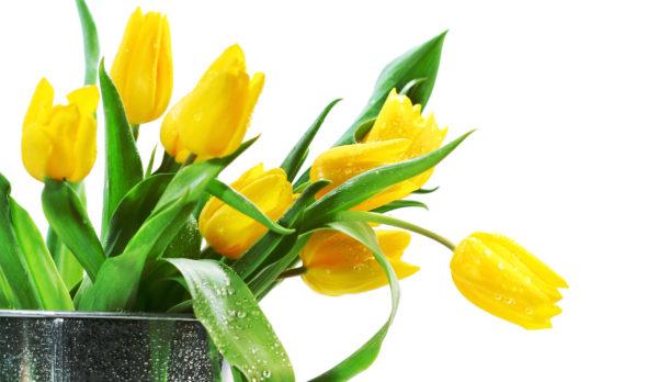1月の誕生花をプレゼントする時のポイントと注意点