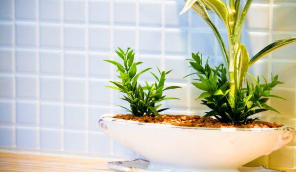 トイレを癒し空間に変える観葉植物の選び方