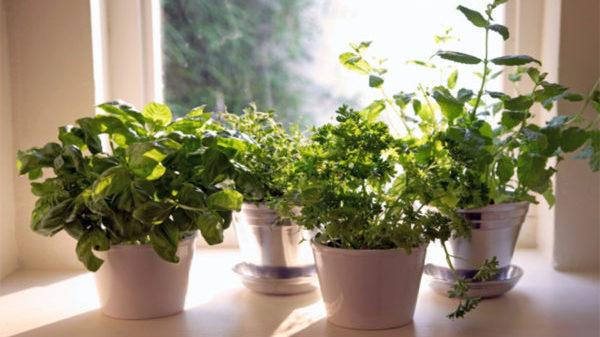 トイレにぴったりの観葉植物の種類と育て方