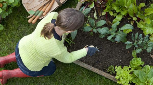 気軽にできるプランター栽培に向いている野菜とは